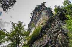 森林和砂岩岩石 免版税库存照片
