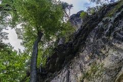 森林和砂岩岩石 免版税库存图片