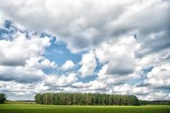 森林和绿色领域自然在多云天环境美化 与全部白色云彩的天空在林木上 自然和自由 图库摄影