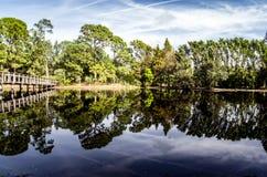 森林和脚跨接仍然反射在透明的水 免版税库存图片