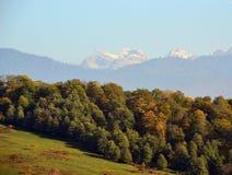 森林和草甸在落矶山脉的背景中 免版税图库摄影