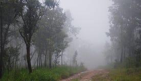 森林和薄雾 图库摄影