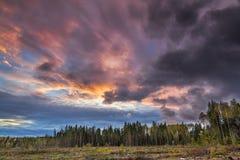 森林和郊外在剧烈的天空下在日落 免版税库存图片