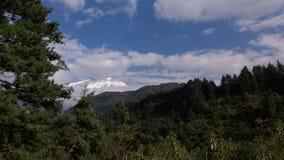 森林和雪加盖的山 库存照片