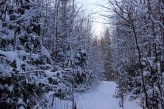 森林和雪 免版税库存照片