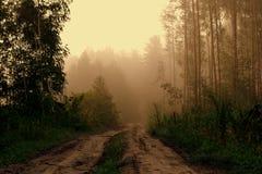 森林和雾 库存图片