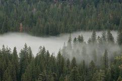 森林和雾 免版税库存照片
