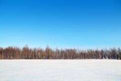 森林和领域与白色雪和蓝天 库存图片