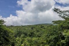 森林和风景在伊林加地区 库存图片