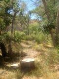 森林和黄色野花 库存图片