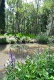森林和水 免版税库存照片