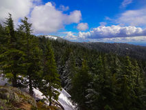 森林和BC天空 图库摄影