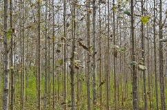 森林四 免版税库存图片