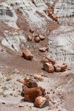森林国家公园石化了 免版税库存照片