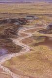 森林国家公园石化了 图库摄影