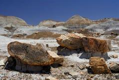 森林国家公园石化了 库存照片