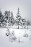森林国家公园taganay taiga ural冬天 免版税图库摄影