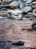 森林国家河白色 免版税库存图片