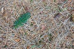 森林土壤 库存照片