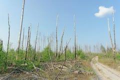 森林土路在中央俄罗斯 免版税图库摄影