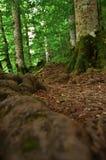 森林土道路 免版税图库摄影