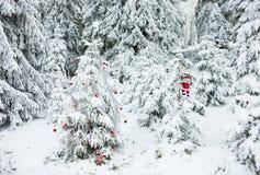 森林圣诞树 免版税库存照片