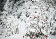 森林圣诞树 库存图片