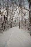 森林在一个公园在冬天 免版税库存图片