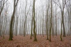 森林在一个有薄雾的秋天早晨 库存图片
