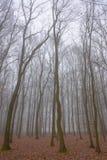 森林在一个有薄雾的秋天早晨 免版税库存照片