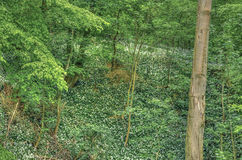 森林在下萨克森州 免版税库存照片