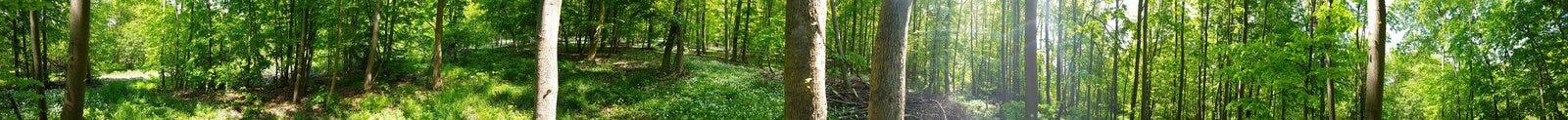 森林在下萨克森州 免版税库存图片
