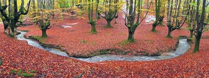 森林在与小河的秋天 免版税库存照片