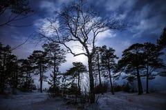 森林在与月光的晚上 库存图片