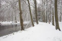 森林在与白色雪和一个冻湖的冬天 库存图片