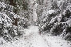 森林在与白色雪的冬天和走在冰路的人 免版税库存照片