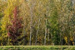 森林在与红色,黄色和绿色叶子的秋天 库存照片