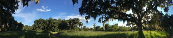 森林在中央佛罗里达 免版税库存图片