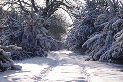 森林在冬天。 图库摄影