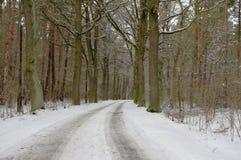 森林在冬天。 库存照片
