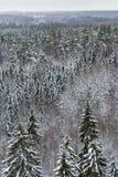 森林在冬天在芬兰 图库摄影