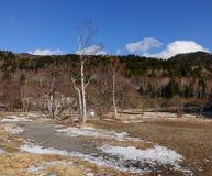 森林在冬天在长野,日本 免版税库存照片