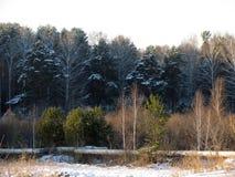 森林在冬天的开头部分 免版税图库摄影