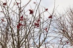 森林在冬天 库存照片