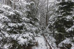 森林在冬天 库存图片