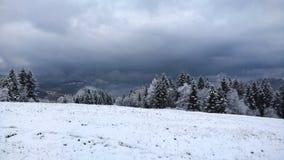 森林在冬天 免版税库存图片