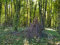 森林在匈牙利 免版税库存照片