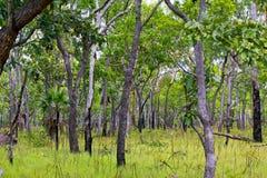 森林在卡卡杜国家公园 图库摄影