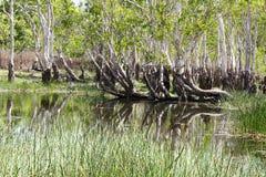 森林在卡卡杜国家公园 库存图片
