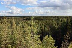 森林在卡累利阿,在峡谷附近 免版税库存图片
